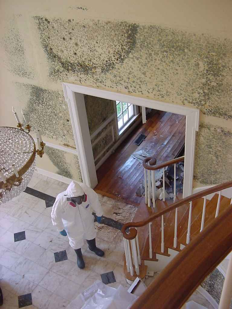 Home mold pictures