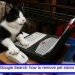 Does Pro Clean Clean Pet Stains?